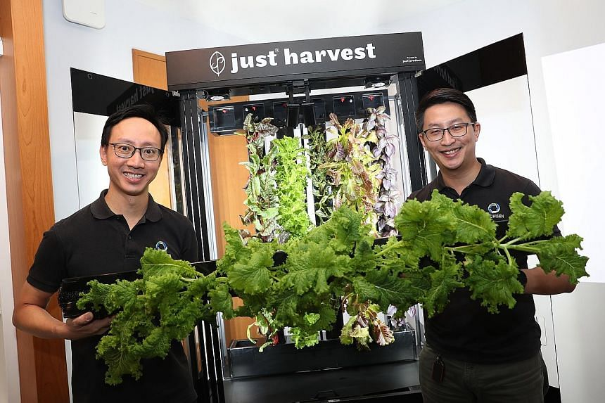 Archisen co-founder and chief executive Vincent Wei (left) and chief technology officer and fellow co-founder Sven Yeo seen here with full-grown veggies from the mini version of its farming system, which will be deployed to restaurants and hotels.