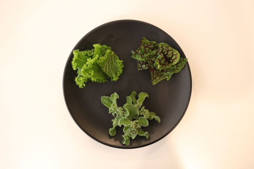 Archisen's speciality herbs include ice plant (bottom, clockwise) mustard greens and red-veined sorrel.