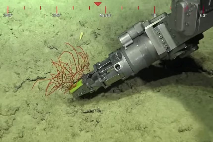 A robotic arm takes a sample from a 500-metre-tall coral reef discovered by Australian scientists.