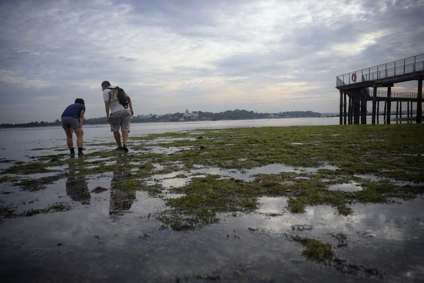 As Singapore aspires to become a City in Nature, there are lessons that can be drawn from conservation efforts on Ubin.