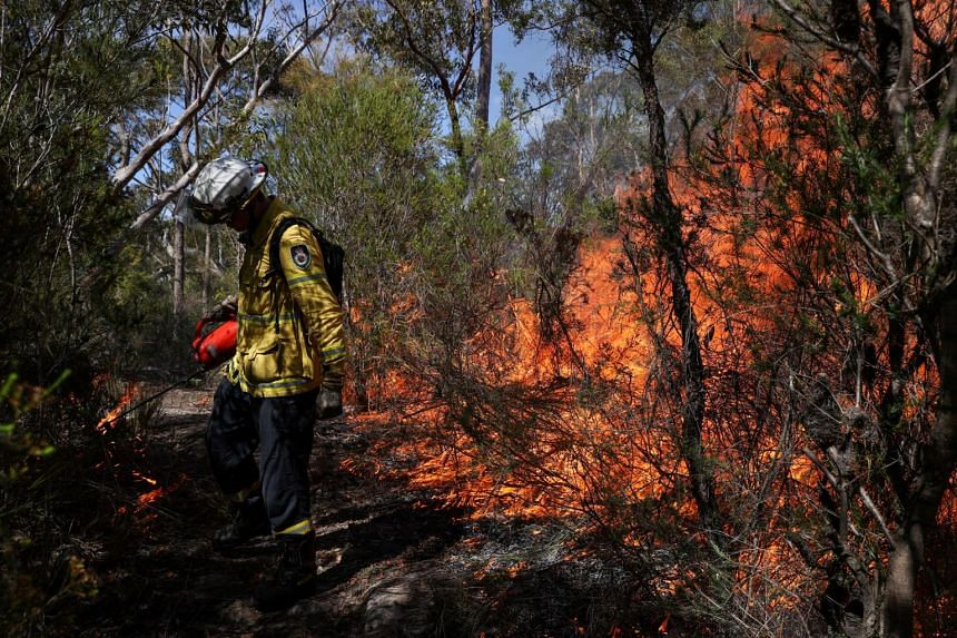 Fires razed more than 11 million hectares of bushland across the south-east early this year.