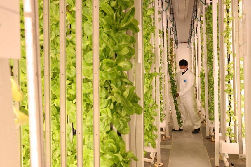 There is a need to re-imagine food production by using innovative technologies such as vertical farms to cut land use.
