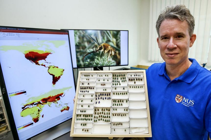 Assistant Professor John Ascher with the global bee map, which is is made up of several maps.