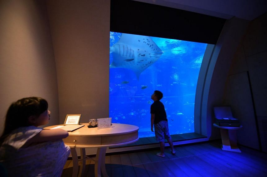 Manta rays, hammerhead and zebra sharks, and shoals of groupers shimmy past your giant 3m-by-3m window.