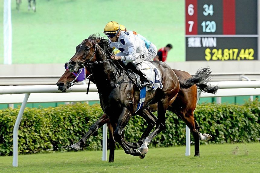 Jockey Vincent Ho guiding Golden Sixty to his ninth straight victory by capturing the Group 2 Oriental Watch Sha Tin Trophy over 1,600m on Oct 18. Tomorrow's Group 2 Jockey Club Mile is his to lose.