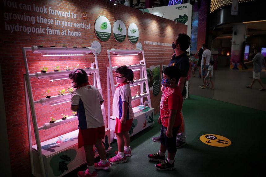 About 600 Tampines residents have already indicated interest in the vertical hydroponic project.
