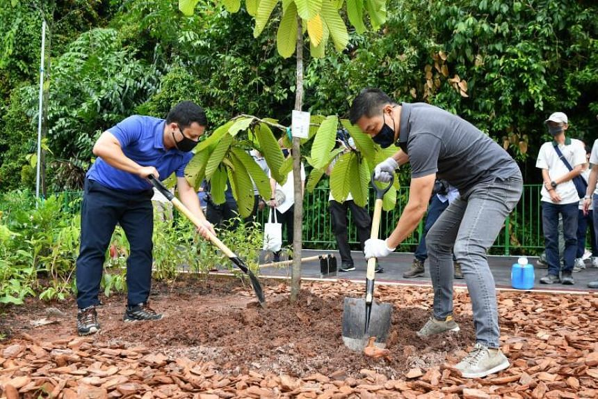 National Development minister Desmond Lee (left) and Speaker of the Parliament Tan Chuan Jin plant a tree at the Lornie Nature Corridor on Nov 21, 2020.