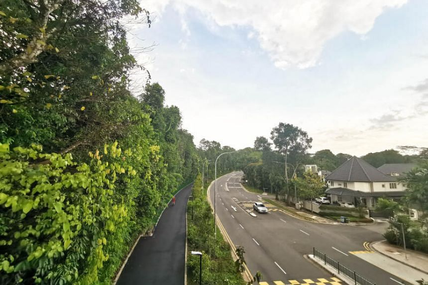 The corridor serves as a green route between MacRitchie Reservoir Park and Adam Road.