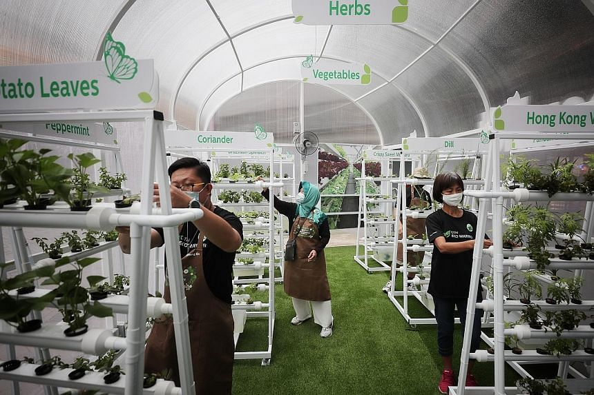 Our Tampines Hub eco-volunteers tending to vegetables planted using vertical hydroponic structures.