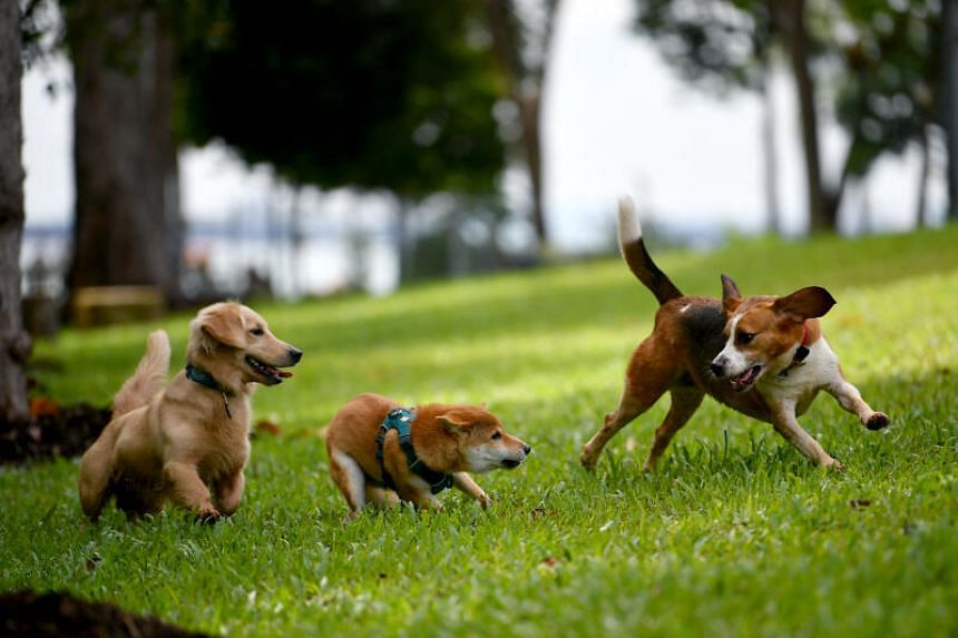 The National Parks Board opening a new dog run and a bird perch at East Coast Park on Nov 22, 2020.