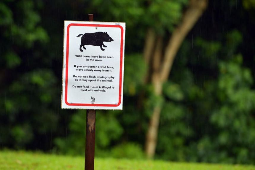 A signboard warning people on what to do if they encounter a wild boar at Windsor Nature Park, following an incident where a woman was injured in 2017.