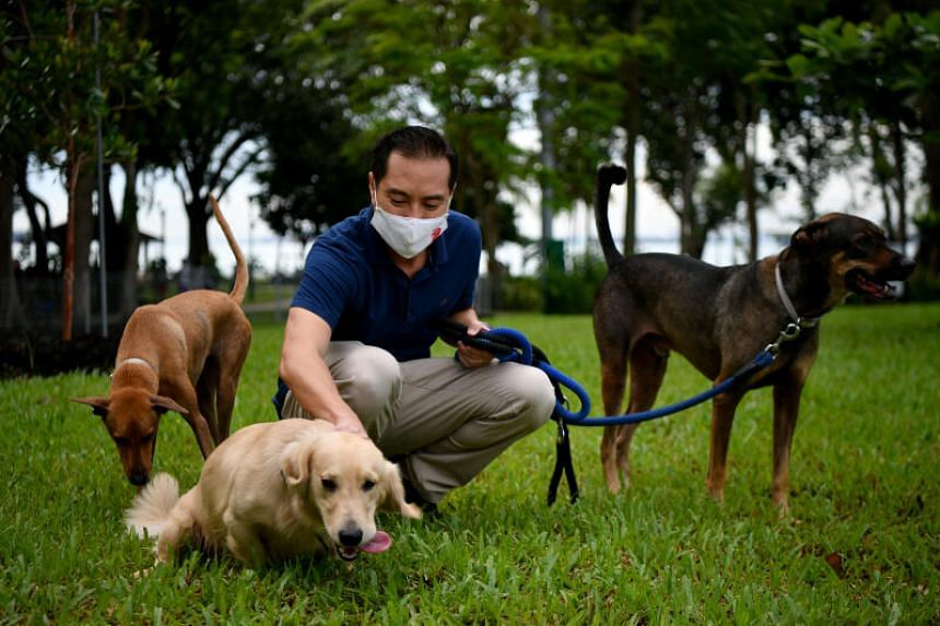 Minister of State for National Development Tan Kiat How with his two dogs, interacting with another dog inside the dog run.