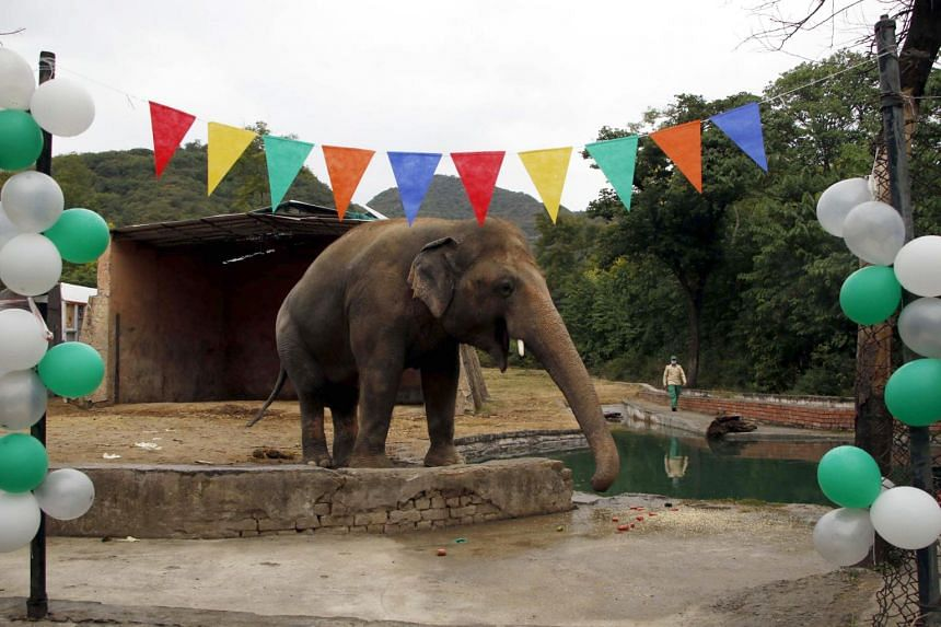 The plight of Kaavan, an overweight, 35-year-old bull elephant, has drawn international condemnation.