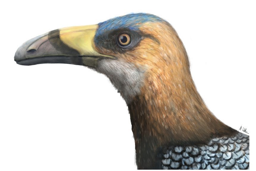 The bird's beak looked superficially like that of a small toucan though the two species are not closely related.