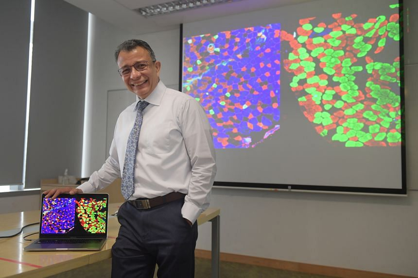 Associate Professor Alfredo Franco-Obregon of NUS' Institute for Health Innovation and Technology showing an image with the different muscle fibre types.