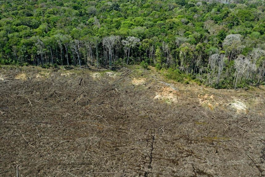 An aerial view of a deforested area close to Sinop in the Brazilian state of Mato Grosso. This year, destruction of the Amazon rainforest rose 9.5 per cent from a year earlier to 11,088 sq km.