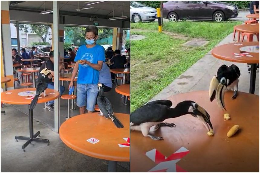 The video shows patrons watching the birds as the hornbills pick food off dining tables.