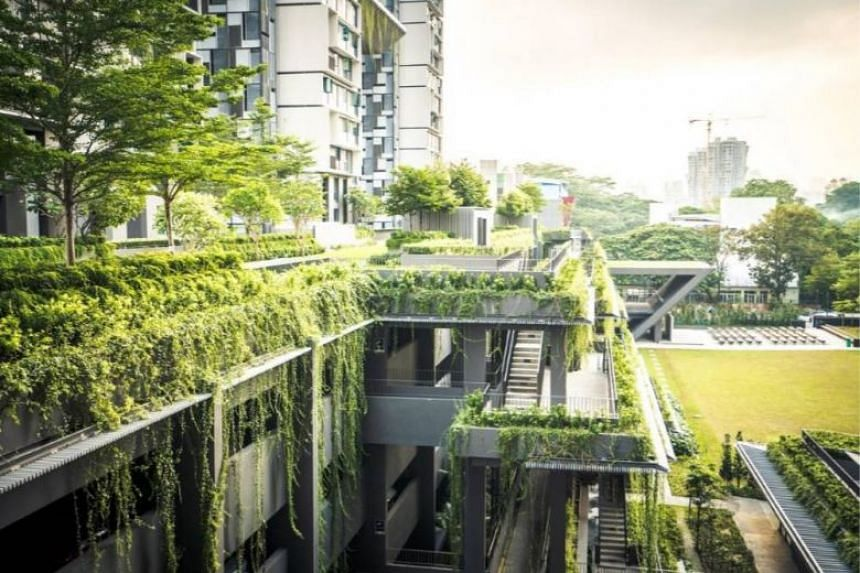 """SMU assistant professor of strategic management Simon Schillebeeckx talks about what a """"green recovery"""" from Covid-19 could look like for Singapore."""