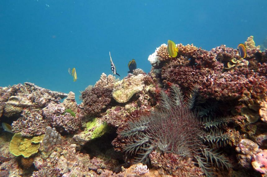 Progress towards safeguarding the reef under a long-term sustainability plan through to 2050 has been slow.