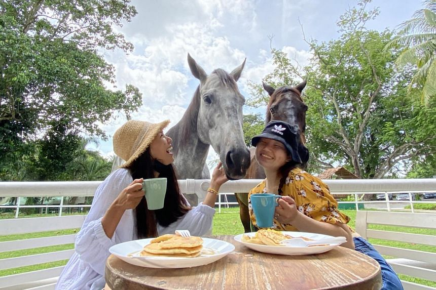 Guests can enjoy a farmhouse breakfast experience with horses brought to the paddock in the hotel's lawn.