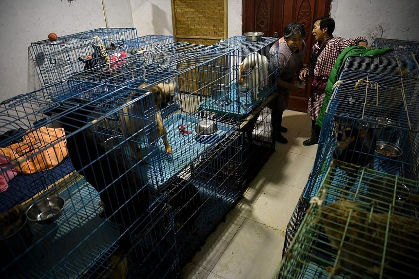 Ms Wen Junhong (top, right) talking to an employee in a room full of rescued dogs kept in cages at her home in Chongqing in south-western China, and preparing food (above) for the more than 1,300 animals that she shares her two-storey hillside home w