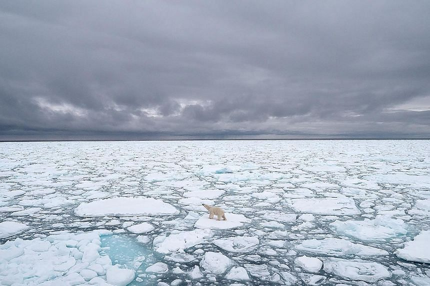A polar bear seen in Svalbard, Norway, in 2018. Environmental scientists have found that the North Pole is heating up twice as fast as the rest of the planet. PHOTO: AGENCE-FRANCE-PRESSE