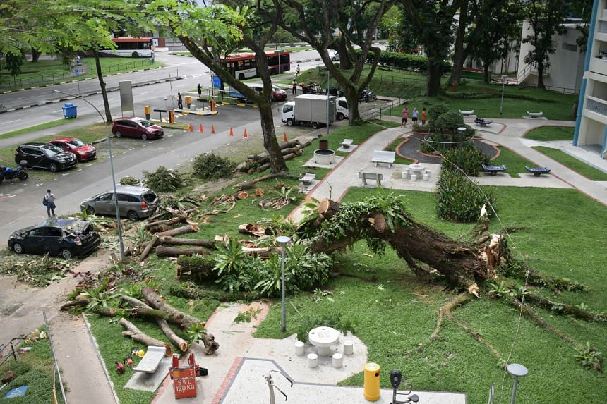 A large tree fell and crushed three cars at Blk 68 Toa Payoh Lorong 4 on Dec 13, 2020.