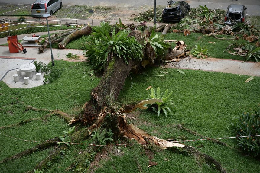 Three cars were crushed after a large tree fell at Blk 68 Toa Payoh Lorong 4 on Dec 13, 2020.