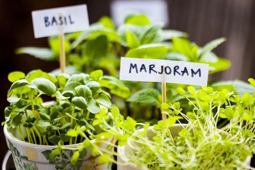 You can save money by growing your own herbs to be used in your cooking.