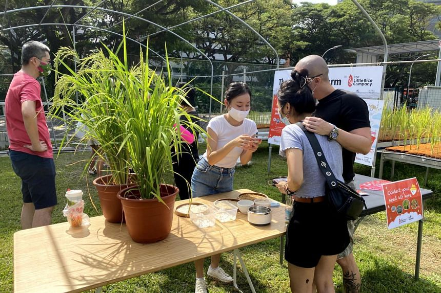 Sprout Hub's bi-monthly Farm Day Out is a chance for the public to interact with about 36 commercial and hobbyist farmers, who rent plots in greenhouses.