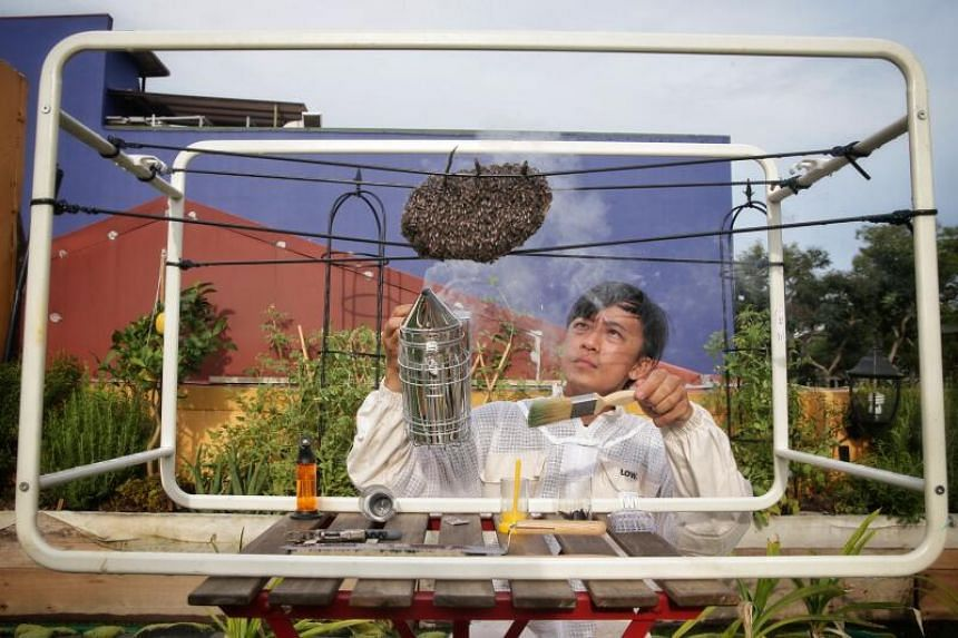 The Sundowner founder Clarence Chua, 37, with red dwarf honey bees at his urban farm atop a Siglap shophouse on Nov 8, 2020.