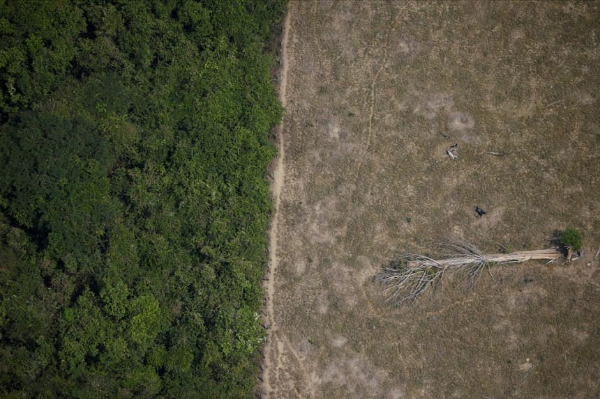 A fallen tree lies in an area of the Amazon jungle that was cleared by loggers and farmers near Porto Velho, Rondonia State, Brazil, on Aug 14, 2020.