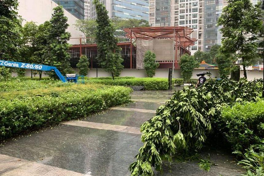 Fallen tree seen at Tanjong Pagar on Jan 2, 2021.
