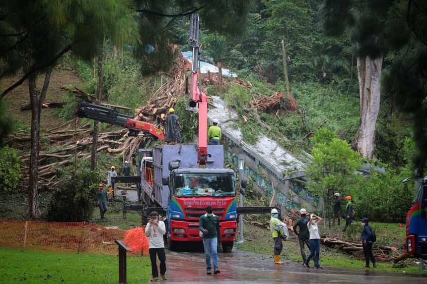 Heavy storms sent a 22m tall tree on the slope of Fort Canning Hill crashing down on Jan 2, 2021.