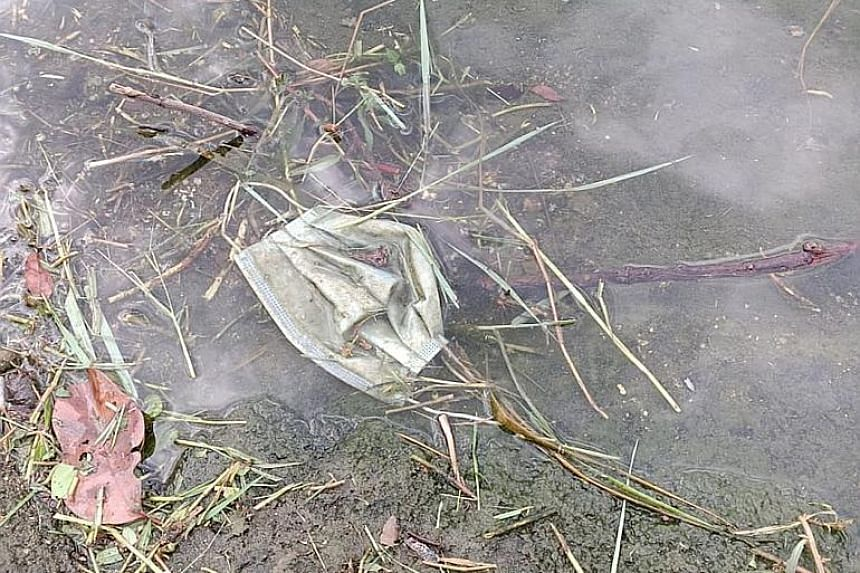 Mask litter found in November by Waterways Watch Society, which typically conducts clean-ups each week at Punggol Waterway Park, Jurong Lakeside Park and Kallang Riverside Park. PHOTO: WATERWAYS WATCH SOCIETY