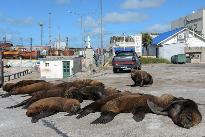 Sea lions spotted near Mar del Plata's harbour in Argentina in April last year during a Covid-19 lockdown.