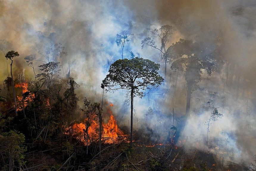 Smoke rising from an illegally lit fire in August last year in Brazil. The record number of wildfires in the nation last year is a blow to biodiversity in the Amazon rainforest, which also saw more illicit logging and mining as monitoring and enforce
