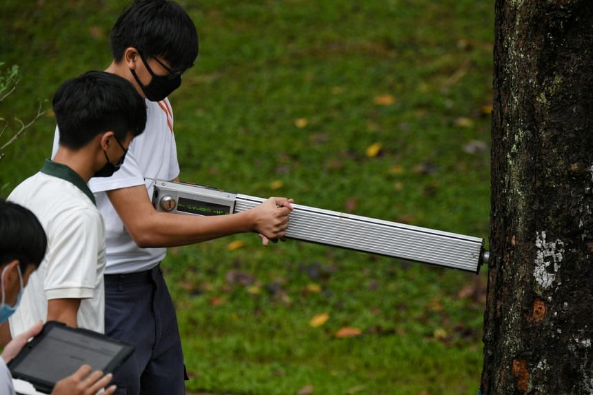 ITE students and NParks staff demonstrating the use of a Resistographc, which tests the health of trees, at Bishan-Ang Mo Kio Park on Jan 11, 2021.