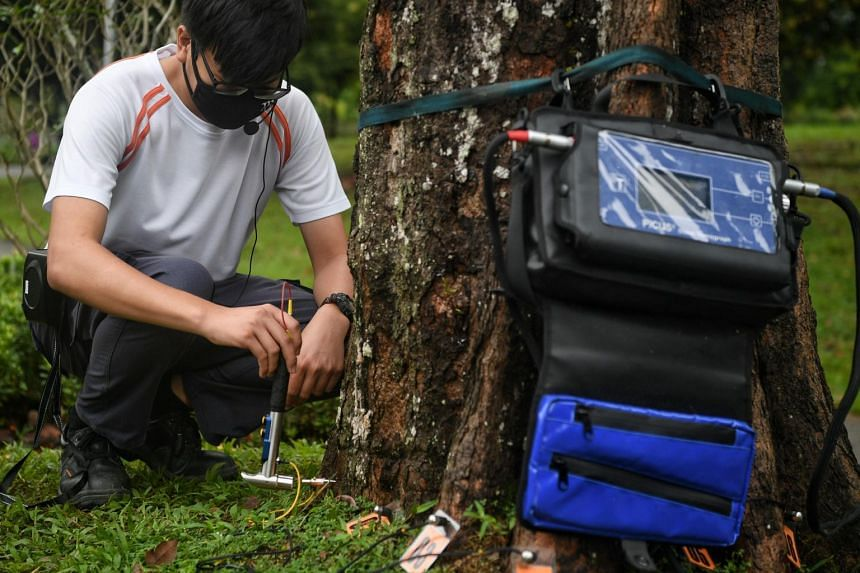 NParks aims to create about 1,000 new and upgraded jobs over the next five years, with many leveraging new technologies as part of a digitalisation push.