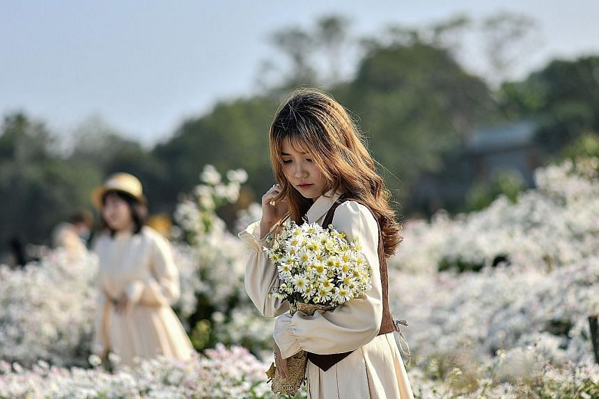 A woman posing for a photograph amid winter daisies at a botanical garden along the Red River in Hanoi, Vietnam. Flower gardens featuring the ox-eye daisy are popular among visitors - the blooms not only make Instagram-worthy backdrops, but also sign