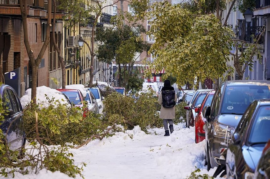 Trees felled by heavy snowfall on a street in Madrid's Lavapies neighbourhood yesterday. After experiencing the heaviest snowfall in 50 years, the city restarted efforts to return to normal yesterday, despite shortages of snow ploughs and salt. With