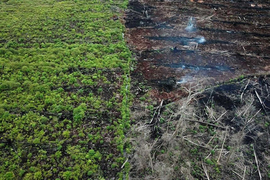 A file photo taken on March 3, 2018 shows an aerial photo of a protected area of the Rawa Singkil wildlife reserve in Trumon, South Aceh.