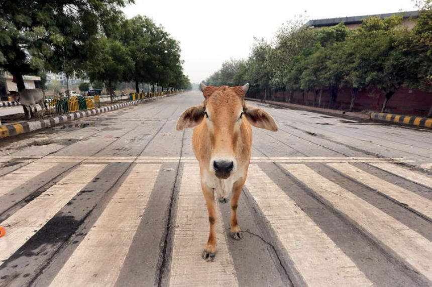 "This move is aimed at generating ""curiosity"" about cows, which many Hindus consider sacred."