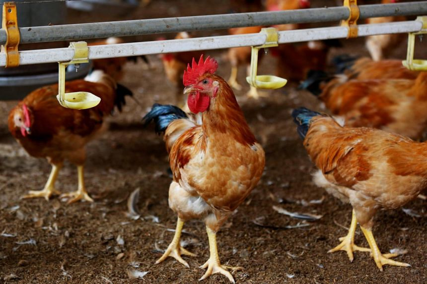 The slaughter of the birds was ordered at a single egg-producing farm in central Hungary.