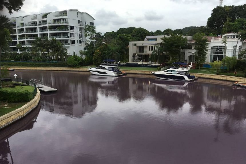 The experts said water circulation between the waterways and the seawater beyond South Cove can help to break up the algae and bring in fresher saltwater.
