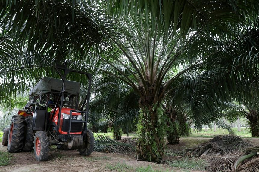 Malaysia is the world's second largest palm oil producer, after Indonesia.