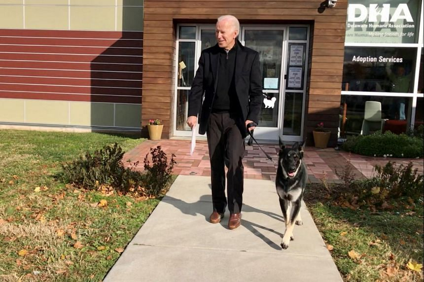 The Bidens adopted Major, a German Shepherd, in November 2018 from the Delaware Humane Association.