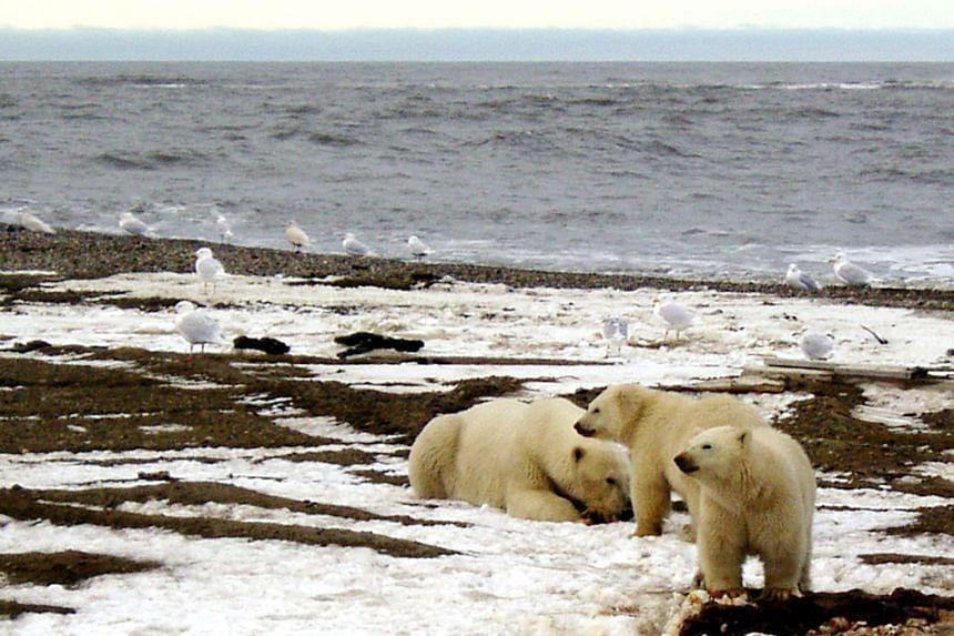 President Joe Biden imposed a moratorium on oil leasing in the Arctic National Wildlife Refuge.