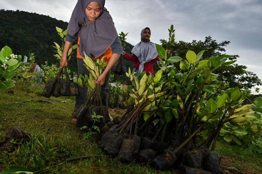 Mangrove rehabilitation has also been added to the list of responsibilities.