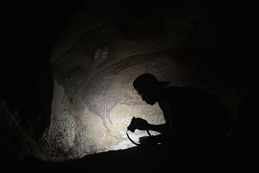 Indonesian archaeologist Basran Burhan beside a painting of a warty pig - the oldest known cave artwork, dating to at least 45,500 years ago - in the Leang Tedongnge limestone cave in South Sulawesi. The Griffith University PhD candidate was the firs